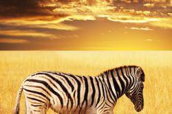 Neuer Afrikafonds von Altira