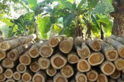 Forest Finance kündigt Wertpapier-Emission an