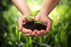 Vier Mythen zum Thema Nachhaltigkeit