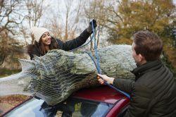 Alle Jahre wieder: No-Gos beim Weihnachtsbaumtransport