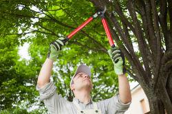 Unfallgefahr beim Baumschnitt: Welchen Versicherungsschutz es braucht