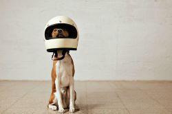 Tierversicherungen: Diese Policen sind (nicht) wichtig