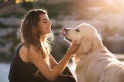 Tierkrankenversicherung: Notfallhilfe für Hund und Halter