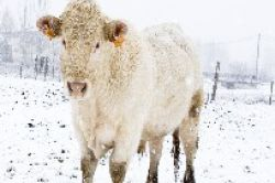 CH2 bekommt die Kuh vom Eis und bringt Solarpark rechtzeitig ans Netz