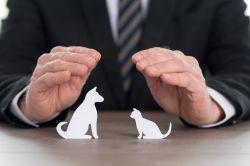 Rating: Die fairsten Tierhaftpflichtversicherer 2018