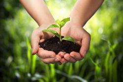 Der Greta-Effekt: Nachhaltigkeit hat Hochkonjunktur