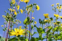 Biogas und Sonnenstrom in einem Fonds