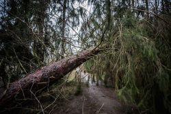 """GDV: Eine Milliarde Euro Schaden durch """"Friederike"""""""