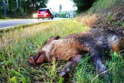 Wenn die Kfz-Versicherung Wildschäden nicht mit einschließt
