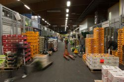 Publity übernimmt Betreibergesellschaft des Großmarktes Leipzig