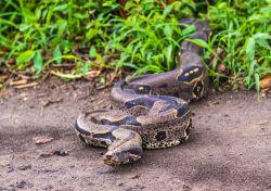 Wer zahlt, wenn eine Schlange entwischt?